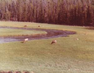 Yellowstone #1 (1978)