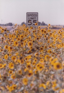 Wild Sunflowers East of Denver #1 (1979) by Mark D. Jones