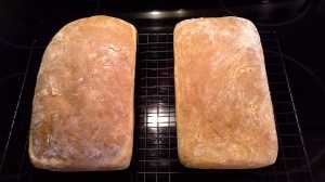 Amish White Bread - 2nd Batch