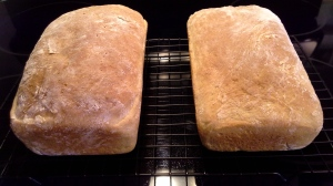 Amish White Bread - 1st Batch